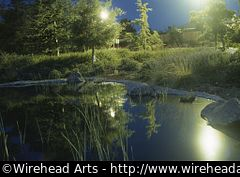 A picture of a little pond taken at night