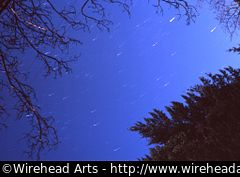 Star trails, seen through the trees.